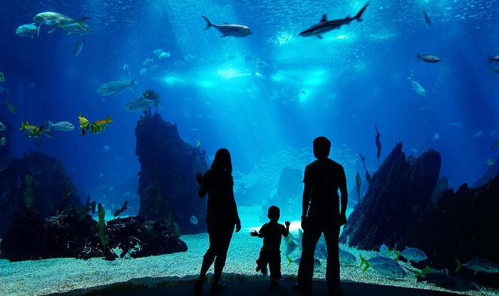 Akvarium - Бостон – столица штата Массачусетс