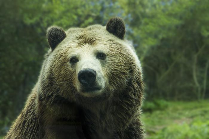 Grizli - Животный мир США
