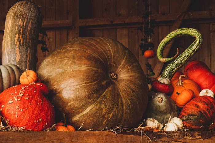 Tykva simvolom obilnogo urozhaya - День благодарения в США: традиции и история праздника