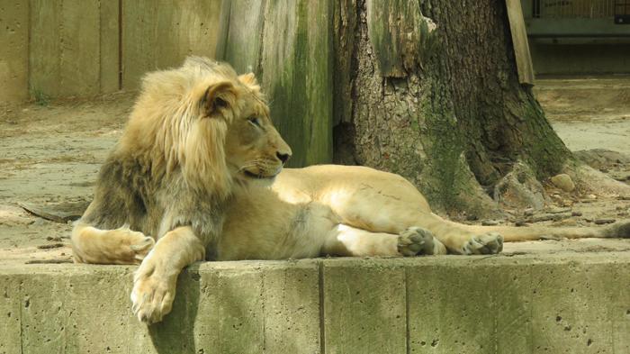 Natsionalnyj Zoopark - Вашингтон: население и его состав