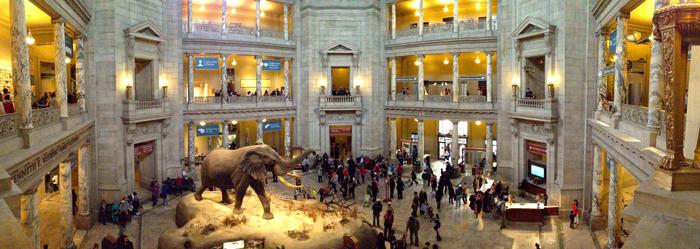 Natsionalnyj muzej estestvennoj istorii - Достопримечательности Вашингтона: музеи