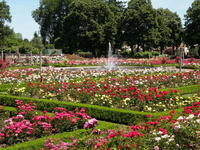 Gorod roz - Город Портленд: «город роз» и «несчастливый город»